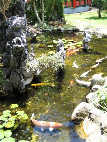 Japanese Goldfish - Hong Kong Ocean Park
