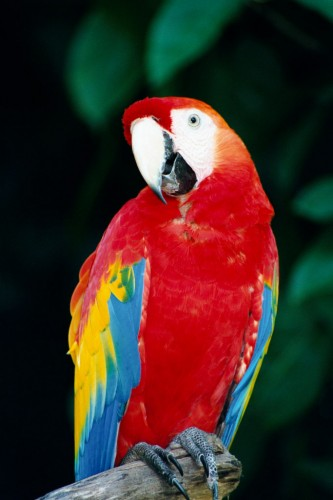Macaw  - Hong Kong Ocean Park