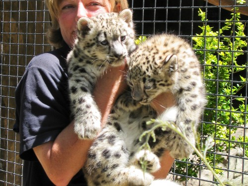 Snow Leopard Cubs - Mogo Zoo - 2003