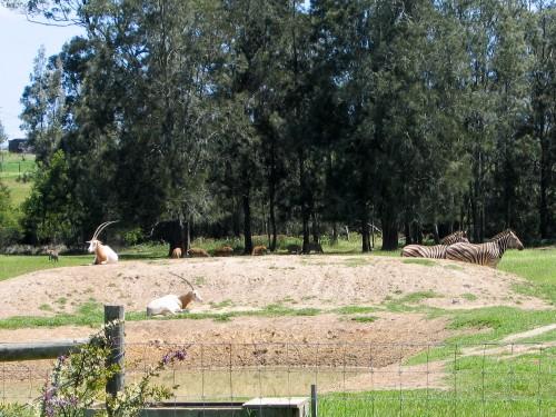Mogo Zoo - 2003