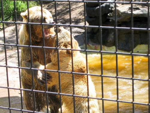 Bears - Mogo Zoo - 2003