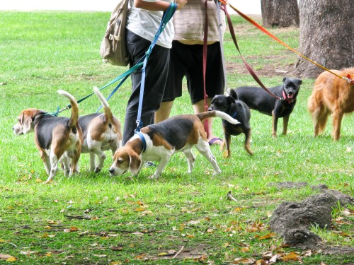 Professional Dog Walkers - Plaza San Martin, Buenos Aires