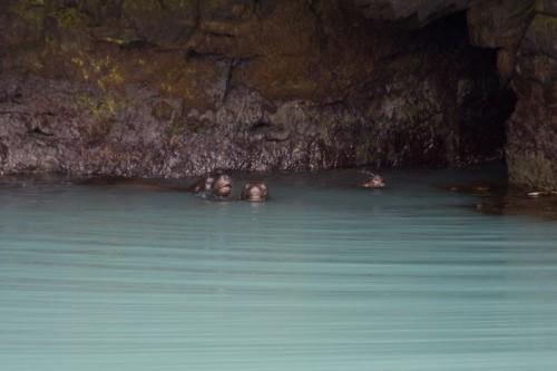 Sea Lions - Cruise to Parque Nacional Bernado O?Higgins - Puerto Natales, C