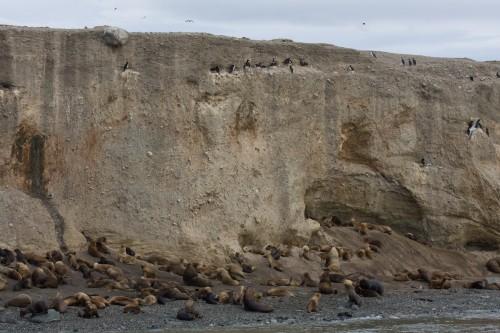 Marta Island, near Punta Arenas, Chile
