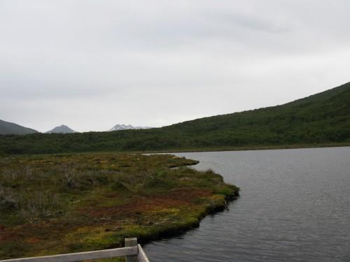 Peat Bog - Lago Negra, Tierra del Fuego National Park - Ushuaia, Argentina