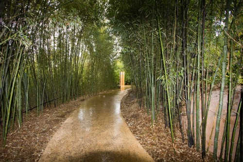 Adelaide Zoo - avenue of bamboo