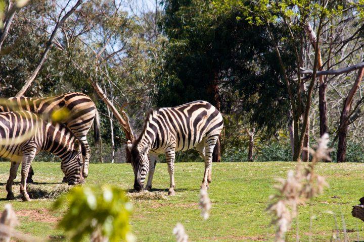 Melbourne – Day 2: Werribee Open Range Zoo