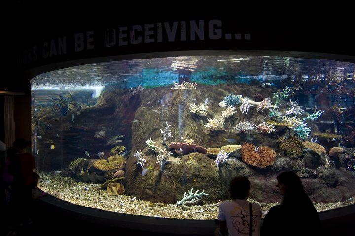 Melbourne – Day 5: Melbourne Aquarium and CBD
