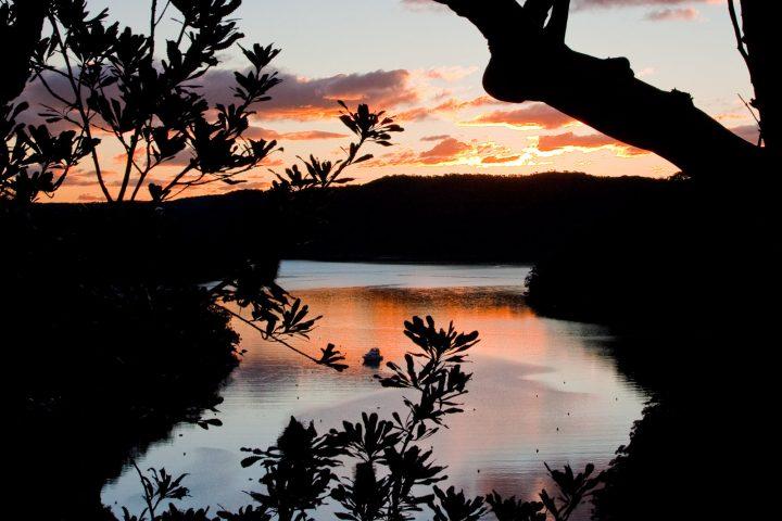 Kuringai Chase National Park at sunset