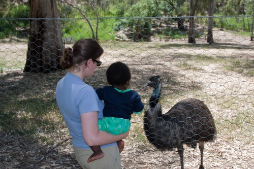 Leanne and Andres say hello to an emu at a small fauna park